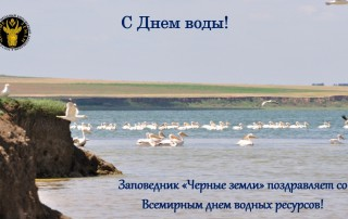 С Днем воды